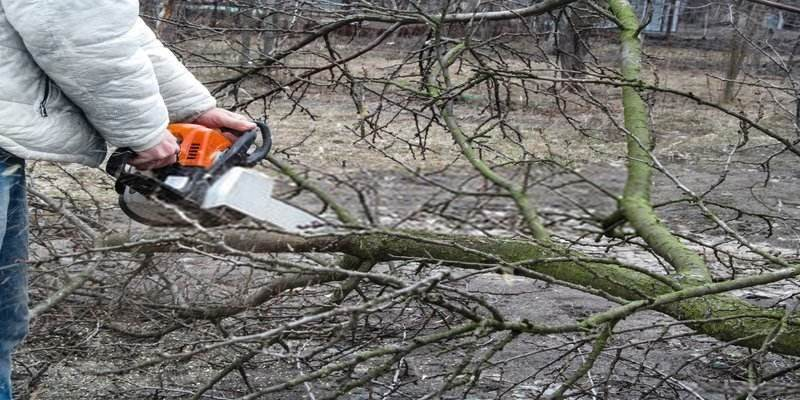 best chainsaw for a homeowner